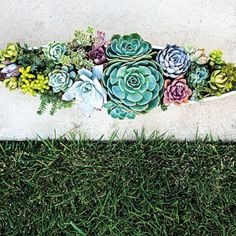 Succulent boat Create a living centerpiece by planting a colorful mix of Echeveria, Sempervivum, and trailing Sedum in a narrow container.  Follow our video for step-by-step instructions.  Photo: Thomas J. Story/Sunset Publishing / Thomas J. Story/Sunset Publishing