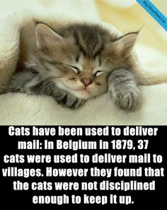 26 Facts About Cats You May Know