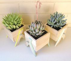 Have your own little box of greenery indoors!  These miniature planter boxes have been carefully handmade from Australian hardwood. Each box comes with hand-painted legs to add a subtle pop of colour to compliment your living or work area (available in any colour).  Size of the box is 8cm (h) x 10.5cm (w), total height is 12cm - Perfect for city spaces, window sills, undercover balconies or just bringing the outdoors in.   Suitable for small succulents or cactus