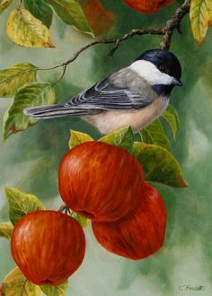 Apple Chickadee Greeting Card 2