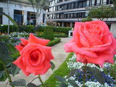 Roses.Jardim de Santa Bárbara do Paço Episcopal Bracarense, em Braga, Portugal |||| Foto: Pedro Andrade
