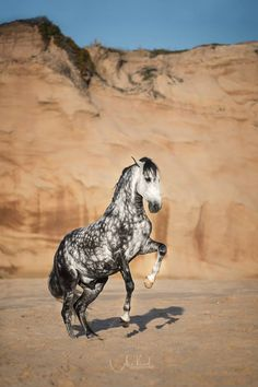 A description of perfect😘😍 Cute Horses, Pretty Horses, Horse Love, Beautiful Horses, Animals Beautiful, Majestic Horse, Majestic Animals, Horse Photos, Horse Pictures