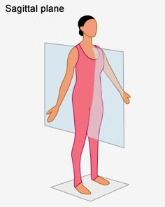 body sections are dividedplanes body sections 1