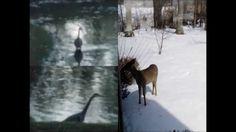 Seeing Wonderful Animals & Beautiful Scenes Home Window - Dinesh Vora