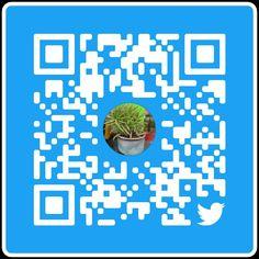 The Donkey Tail Plant: Care, Propagation, Problems & Benefits - Greenkosh Jade Plants, Fruit Plants, Exotic Plants, Tropical Plants, Snake Plant Images, Snake Plant Care, Sansevieria Plant, Avocado Plant, Moss Plant