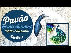 Colorindo o pavão do livro Reino Animal! (Parte 1) - YouTube