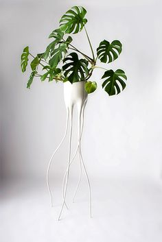 decoración industrial-diseño-macetero monstera Decoración con plantas