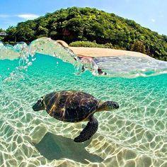 Wonderful Oahu, Hawaii