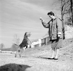 A woman exercising her airedale. c. 1955