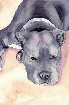 Blue Pits Blue is a pit bull dog with a small white marking on his chest and on the tips of his paws. This watercolor pen and ink sketch depicts, Blue the blue nosed pit bull dog laying in the shade on a warm s - Animal Sketches, Animal Drawings, Pitbull Terrier, Pitbull Drawing, Pitbull Blue, Pit Bulls, Dibujos Tumblr A Color, Pen And Watercolor, Watercolor Paintings