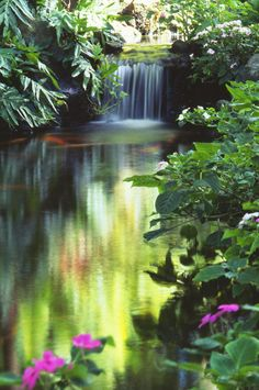 Waimea Falls Park | Photo: Bill Brennan - Printscapes with Pin-It-Button on FineArtAmerica