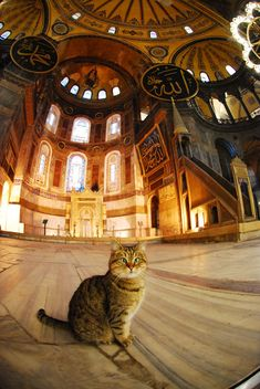 His name is Gli and is very cross-eyed. He lives inside Hagia Sophia.Obama pet him on his visit to Istanbul and has been famous since.Hagia Sofia İstanbul Turkey, By Alika