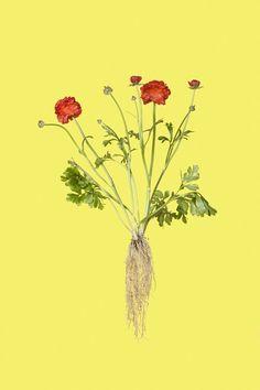 New Botanicals | iGNANT.de