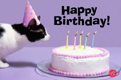 FREE E Cards Birthday CatsBirthday