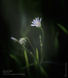 Little light by rpaderno. @go4fotos