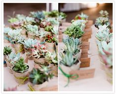 I love how these mini succulent escort cards are wrapped with burlap...so beautifully rustic! From http://100layercake.com/blog/2012/10/18/crafty-california-wedding-ilana-mark/  Photo Credit: http://lovemesailor.com/#/page/9107/weddings/