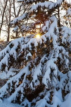 Winter Time, Fall Winter, Robert Frost Poems, Beautiful Landscapes, Beautiful Scenery, Winter Beauty, Cozy Christmas, Top Photo, Four Seasons