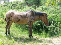 14 animaux hybrides existent réellement, aucune de ces photos n'a été retouchée