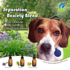 The use of Essential Oils with animals works on multiple levels, especially physically and emotionally. The action of diffusing an essential oil or essential oil blend can be very successful for Separation Anxiety in Dogs. Add this blend to your Essential Oil Pet Diffuser, clip it on their collar and watch how this can help them relax and gives them the support until they eventually realize that you haven't left forever. *Remember your dilution percentages and to ease them into EO's: