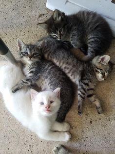 Happy, sleepy kitties...