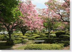 12 Single Grave Spaces for Sale $1Kea! King Solomon Memorial Park Clifton, NJ Bethel The Cemetery Exchange 20-0705-7