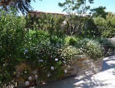 garden designed by Sally Perigo www.spgardens.net