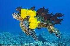 Turtle through a natural car wash ;)