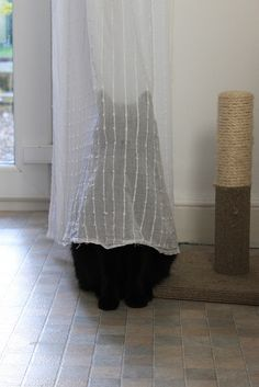 Hiding! My cat Sam does this, but he forgets to pull his tail in with him! My curtains go to the floor, so it looks hilarious.