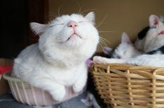 .Shiro always makes me smile :)
