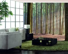 Sunrise in the forest wallpaper, kidsroomscanada
