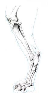 Image result for cat leg