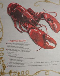 Lobster Placemats How to Eat Directions disposable paper place mats clambakes