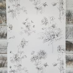 Black and White Meadow in Bloom By York Wallcoverings Waverly Garden Party
