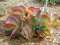 Xeriscaping – South Africa Indigenous Plants Landscaping with plants that can tolerate drought conditions or do not require additional watering is called xeriscaping. Typically one will choose xerophytes for this. Xerophytes are plants that have adapted to survive with little water. The list of plants below is xerophytes that are indigenous to South Africa. There are …