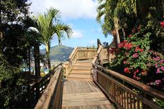 Thomas ,a walk way on top of the mountain. St Thomas Usvi, Double Dare, Virgin Islands, Gypsy Soul, Cruise Vacation, Dares, Garden Bridge, Saints, Mountain