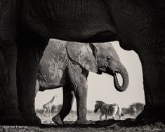 10 Remarkable Finalists in the Wildlife Photographer of the Year 2015 Contest - My Modern Met