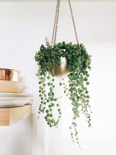 The elegant String of Pearls plant is part of the succulent fam, so be weary of overwatering it.