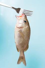 vida eco organica | Vida Eco Organica (eco life): Mercurio en los peces