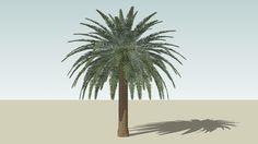 Canary Island Date Palm - 3D Warehouse
