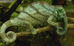 Chameleophant