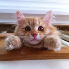 What a cutie...just look at that nose !