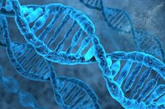 A new study provides more evidence that identical sections of DNA can match up with each other without the help of other molecules. DNA molecules in our