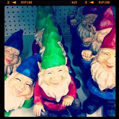 So many gnomes....