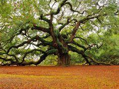 Il calendario degli alberi: scopri che albero sei e che personalità hai