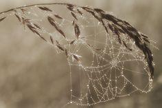 Free stock photo of cobweb cobwebs macro