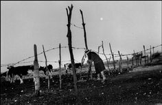 Larry Towell MEXICO. La Honda. Zacatecas. 1994. Closing the gate after milking / Magnum Photos