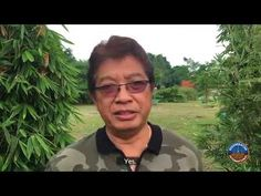 The Philippines Just Made It Illegal to Grow GMOs! Perpetrators Can Even...