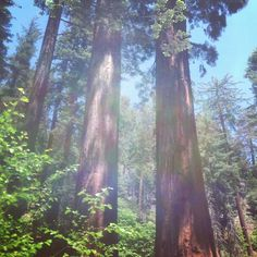 Sequoia National Park in Sequoia National Park, CA.  It was established on September 25, 1890. it is famous for its giant sequoia trees, including the General Sherman tree, one of the largest trees on Earth. Find more info @ http://en.wikipedia.org/wiki/Sequoia_National_Park Bring a hammock to hang with @ http://hammocktown.com/