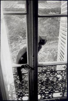 Картинки по запросу willy ronis les chats