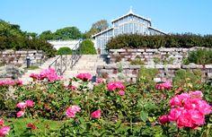 Talvipuutarhan ruusutarha kokonaisuuteen kuuluvat myös harmaakiviset tukimuurit [Erja Lehto]